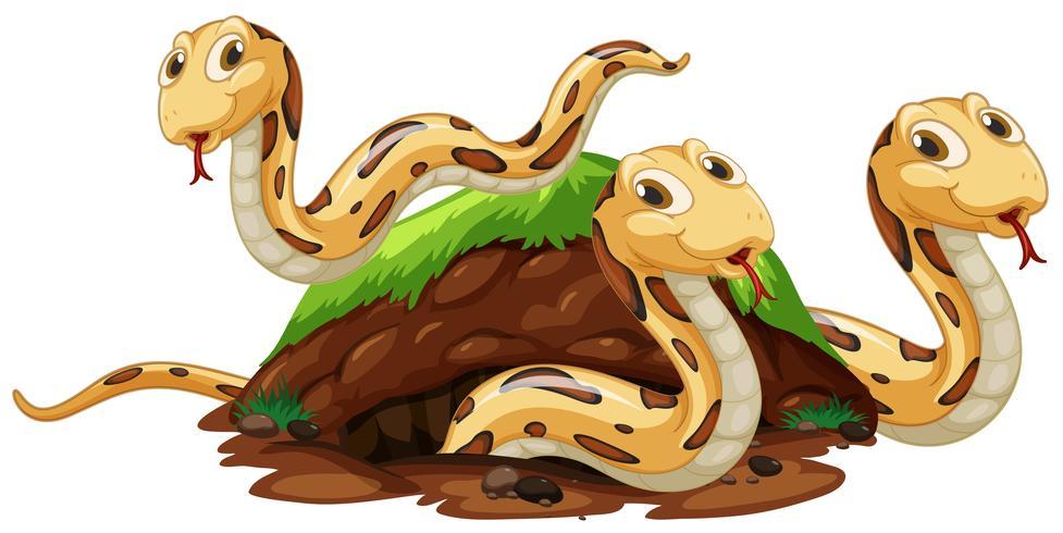 Serpiente familiar que vive el agujero subterráneo