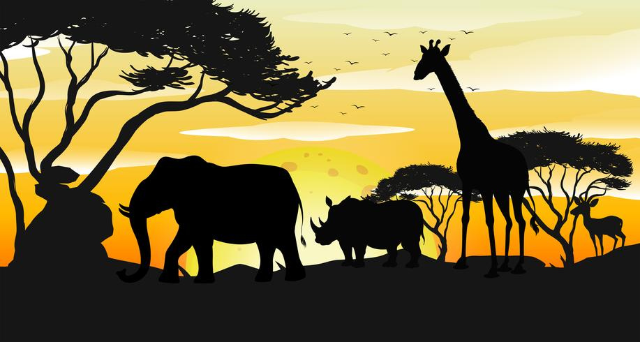 Cena de pôr do sol de silhueta de savana africana