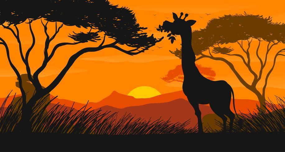 Escena de silueta con jirafa comiendo hojas