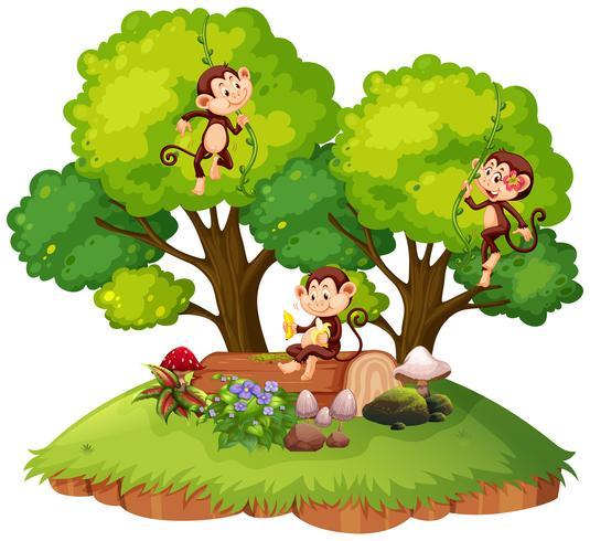 Scimmia sulla natura isolata