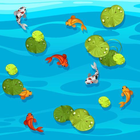 Gros poisson koi dans un étang