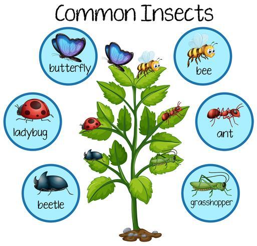 Vanliga Insekter på växt