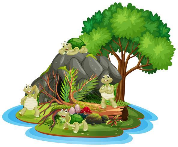 Schildkröte auf der isolierten Höhle
