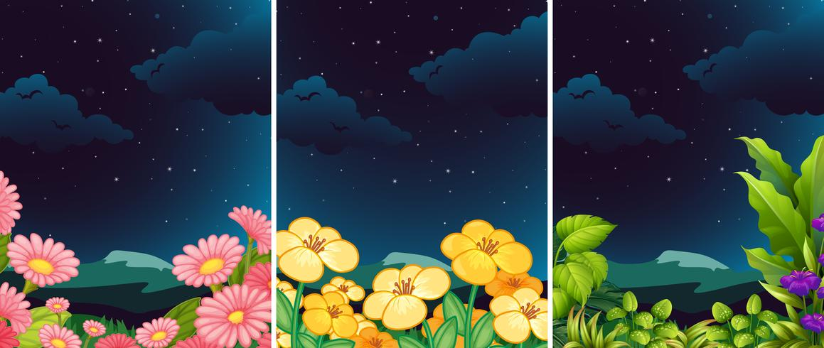 Una serie di fiori in natura durante la notte