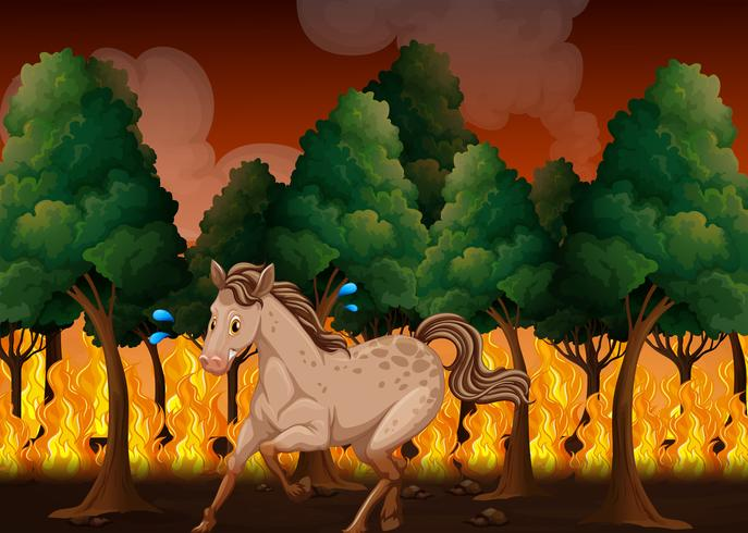 Um cavalo fugir de um incêndio