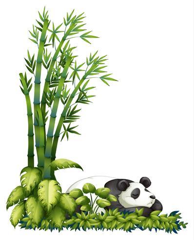 Een slapende panda