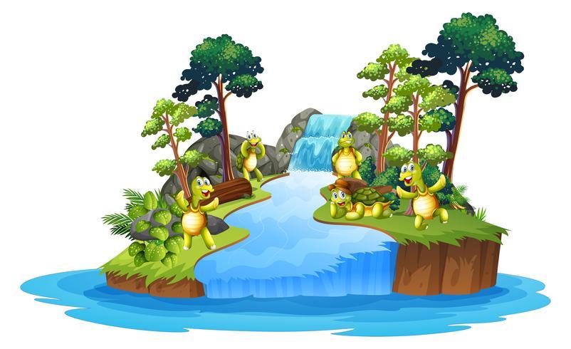 Geïsoleerde schildpad in de natuur