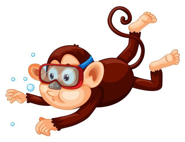 Een aap die op witte achtergrond duikt