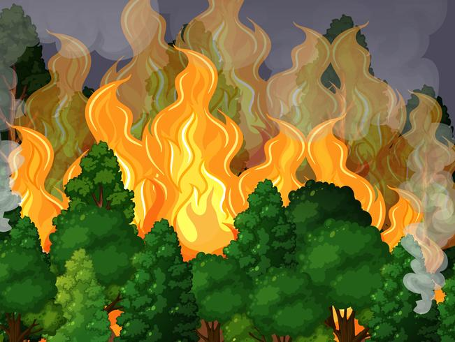 Ein Wald mit einer Waldbrandkatastrophe
