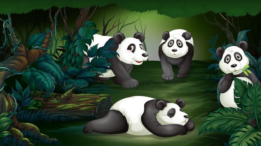 Panda nella foresta oscura
