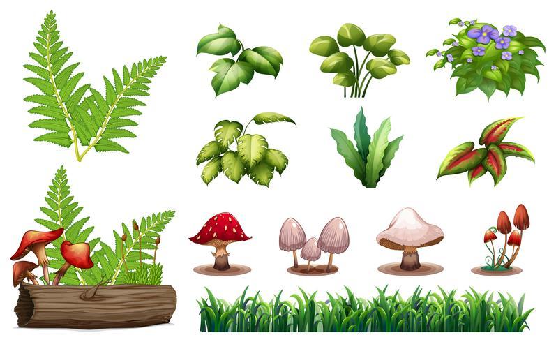 Ensemble de plantes forestières