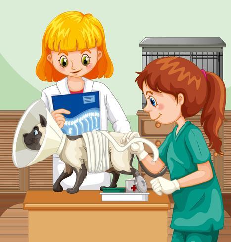 Médico veterinario ayudando a un gato