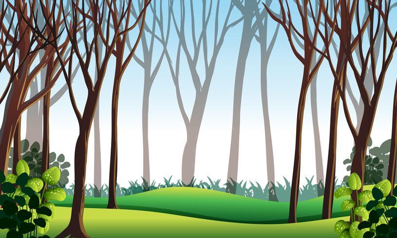 Waldszene mit grünem Gras