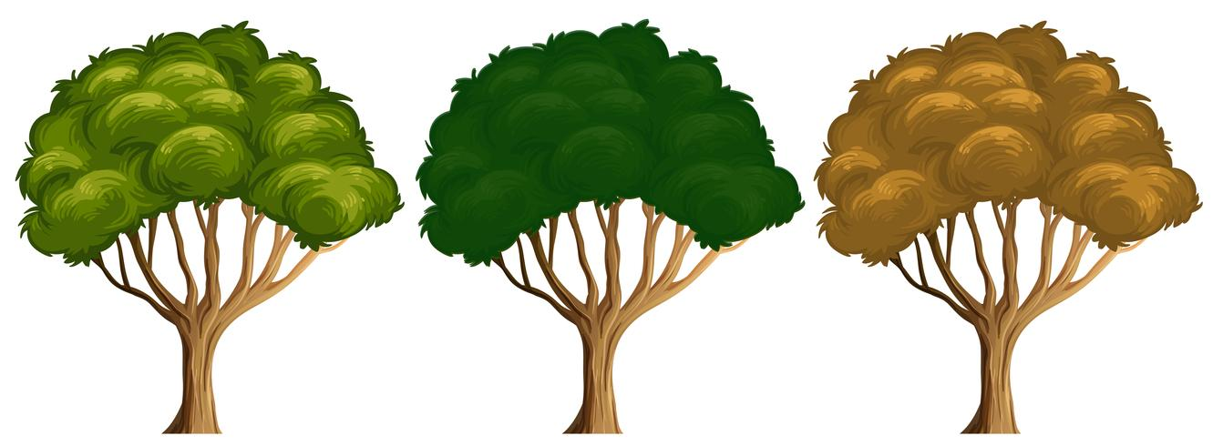 Satz unterschiedliche Farbe des Baums