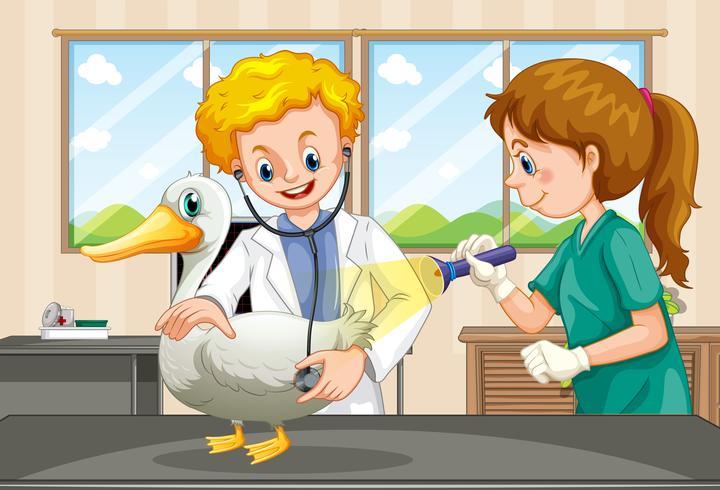 Vétérinaires examinant la santé d'un canard