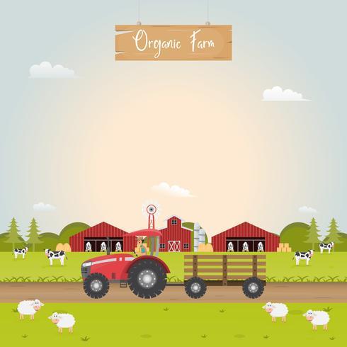 Jordbruk med stallhus och husdjur.