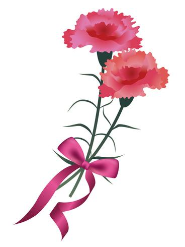 Carnation bouquet with a pink ribbon for Mother's Day, birthday, wedding, etc. vector