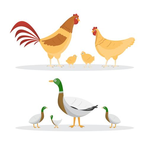 Chicken and ducks. set of animals inside farm isolated on white background