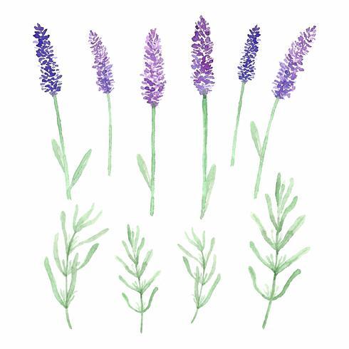 Aquarell Lavendel Blumen und Blätter