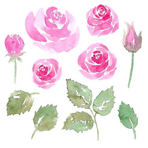 conjunto de elemento de flor rosa aquarela vetor