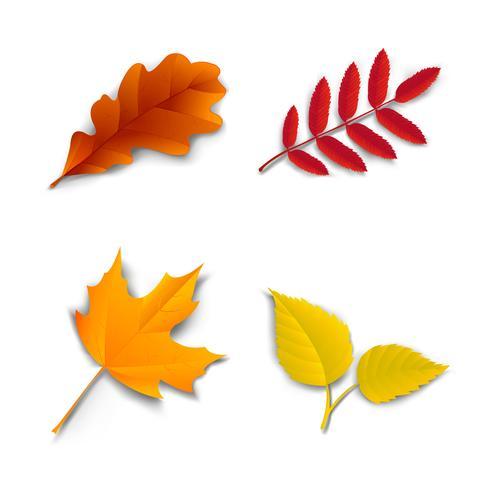 Autumn oak maple ash birch leaves