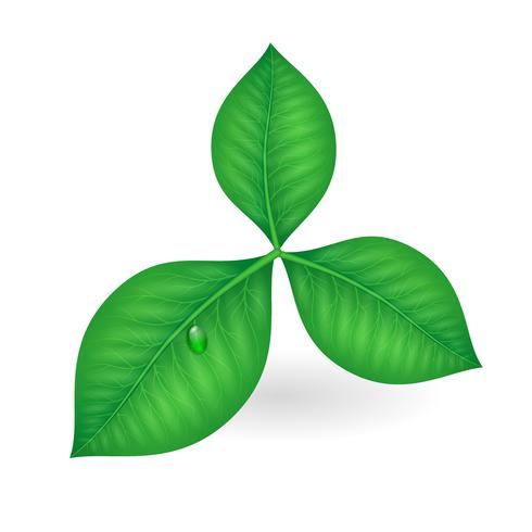 Green leaves symbol vector