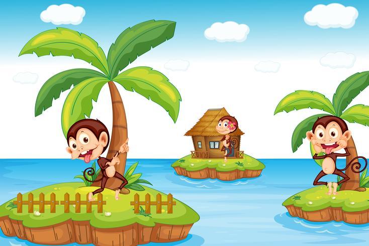 Apen op het strand