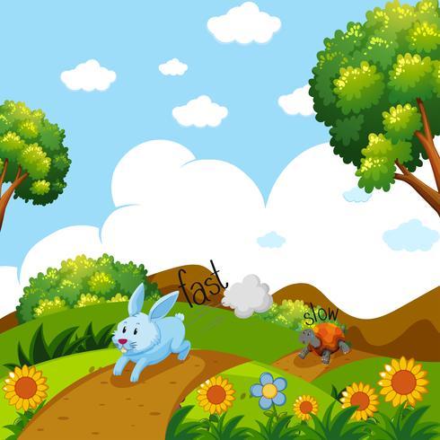 Gegensätzliche Wörter für schnelles und langsames Laufen mit Kaninchen und Schildkröten