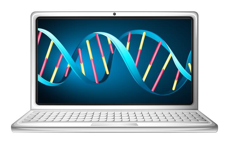 Computerlaptop mit DNA striat auf Bildschirm