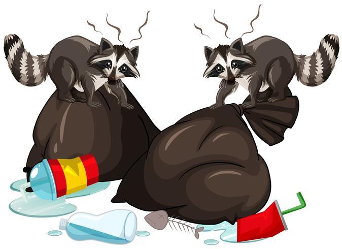 Dos mapaches en busca de basura
