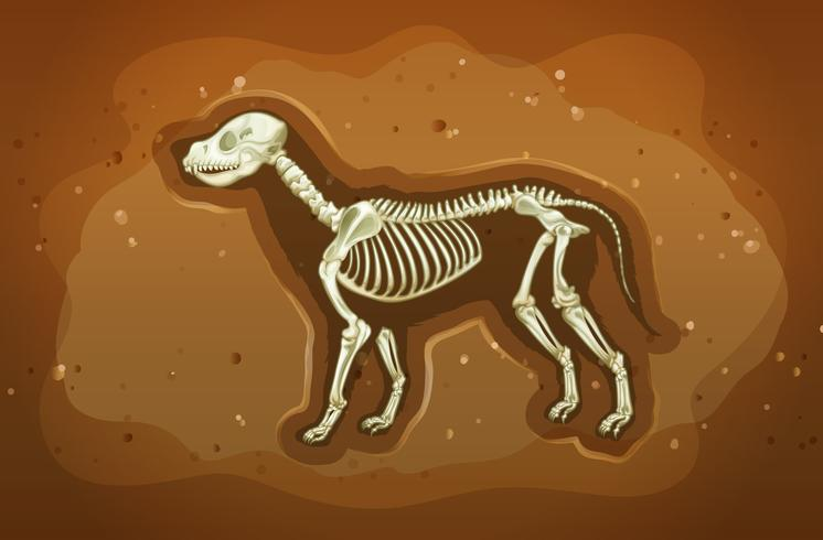 Fosil vector