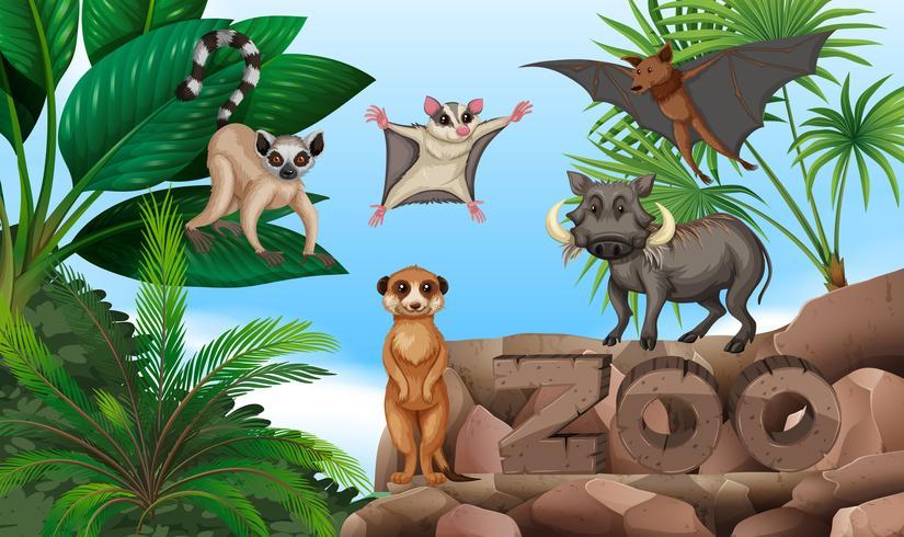 Diferentes tipos de animais selvagens no zoológico