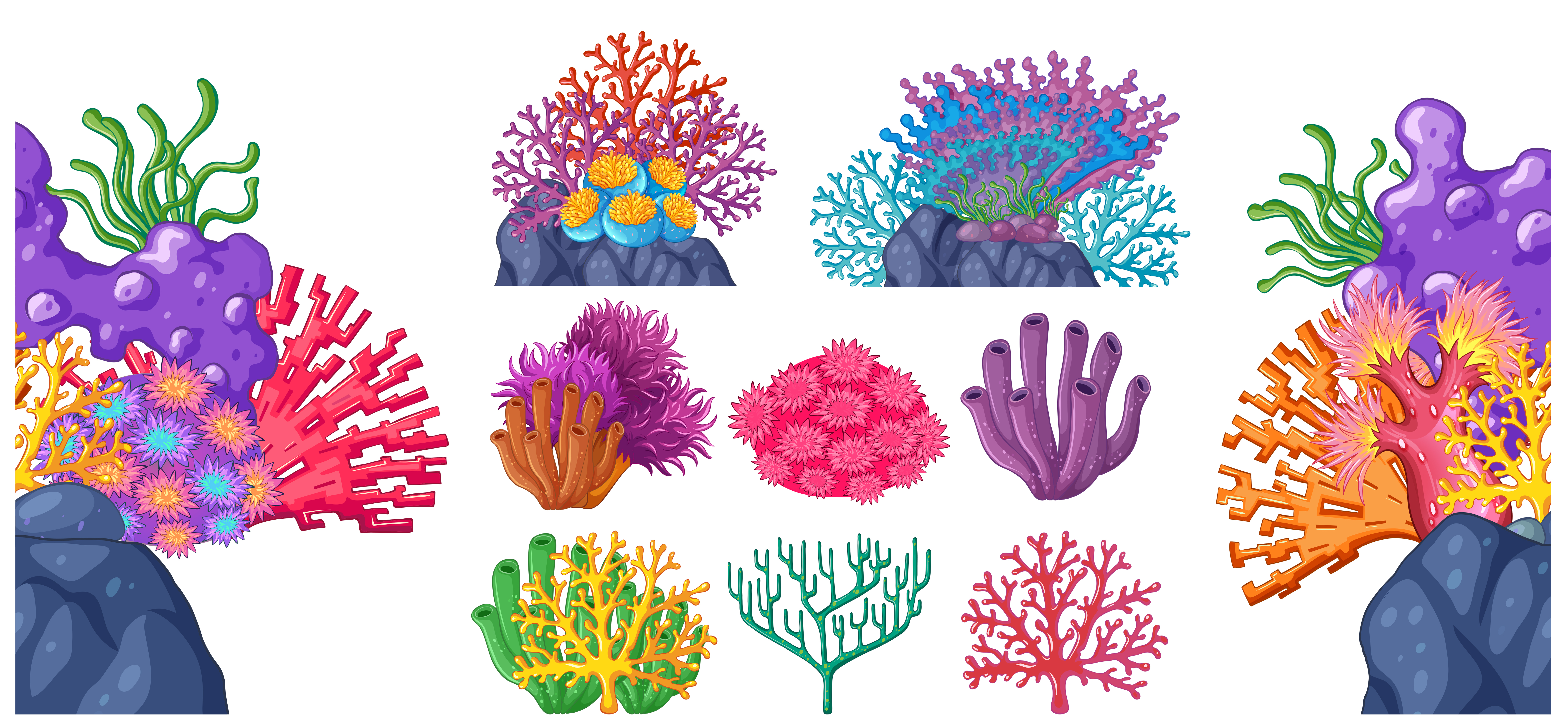 Different Types Of Coral Reef Download Free Vector Art