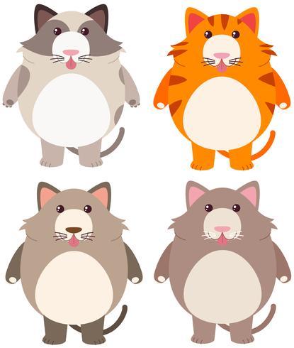 Quatro gatos gordos em cores diferentes