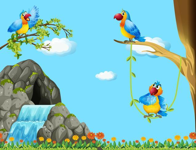 Drei Papageien, die an der Höhle leben