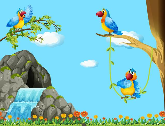 Tre papegojor som lever i grottan