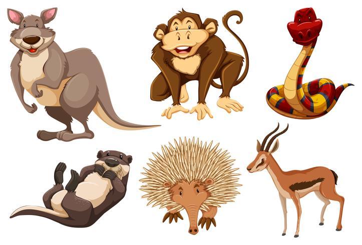 Sats av vilda djur vektor