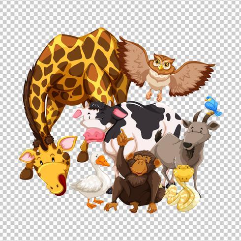 Viele wilde Tiere auf transparentem Hintergrund