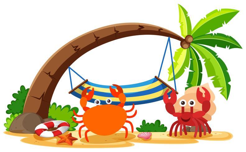 Caranguejo e caranguejo eremita na praia