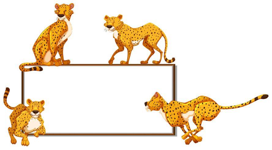 Whiteboard en veel cheeta's
