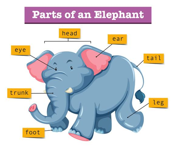 Diagrama mostrando partes do elefante