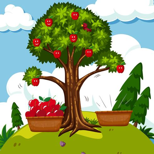 Red apple tree in the field