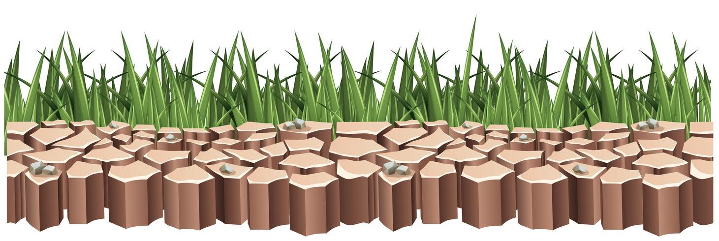 Trockenes Land und grünes Gras