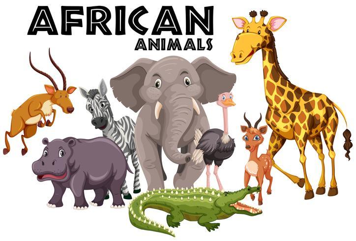 Animali africani su sfondo bianco