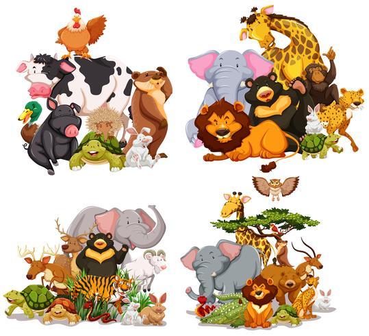 Cuatro grupos de animales salvajes.