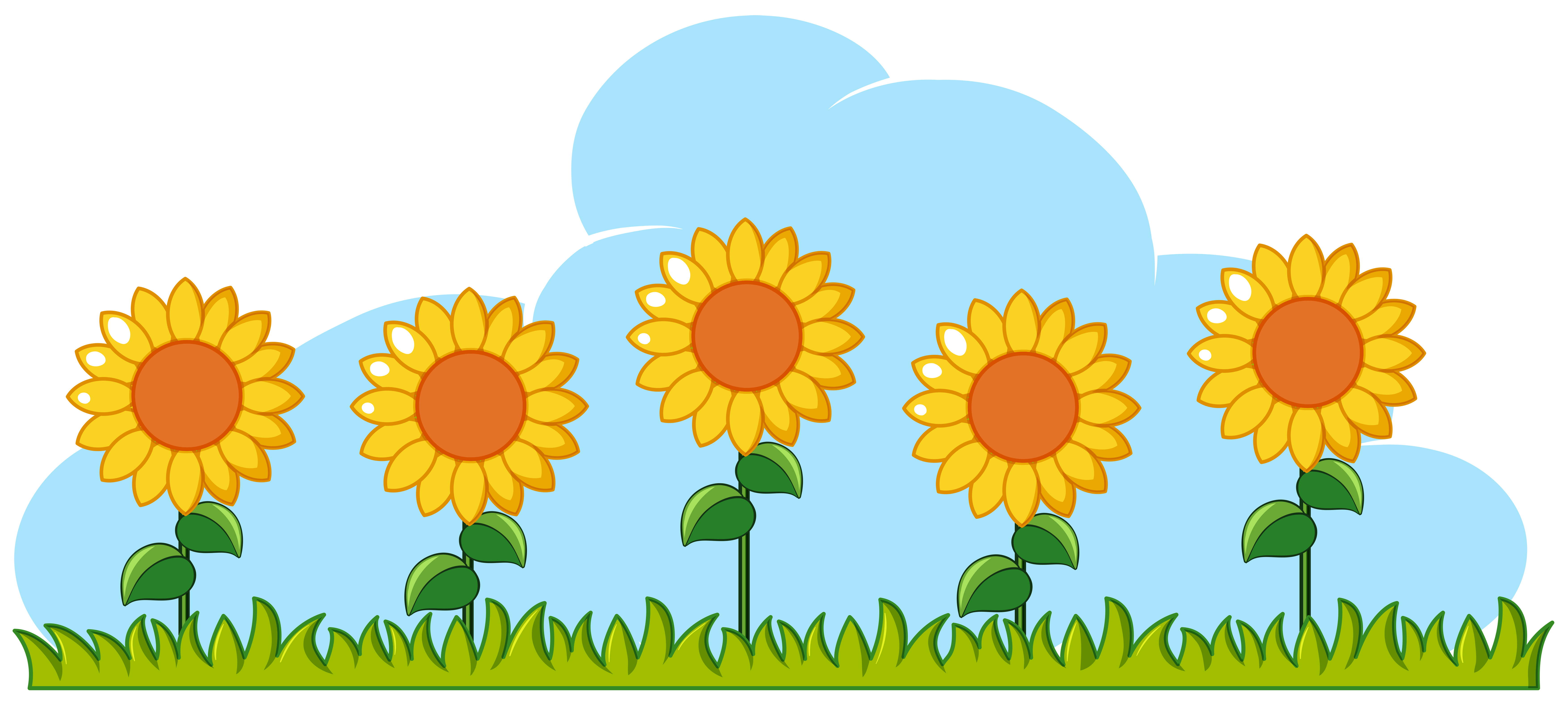 Sunflowers in garden on white background - Download Free ...