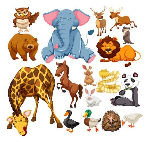 Animales salvajes en blanco