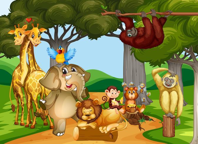 Wilde dieren die in het bos leven vector