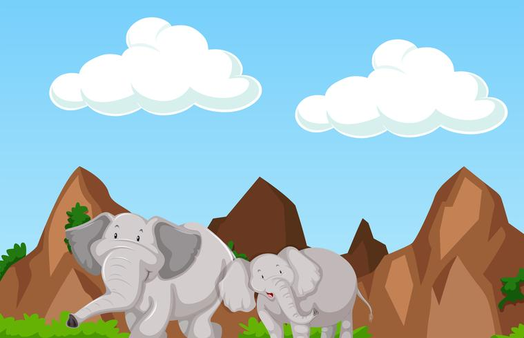 Scène avec deux éléphants dans la montagne