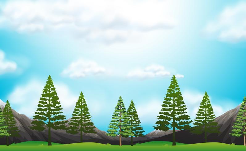 Naadloze achtergrond met pijnbomen in park